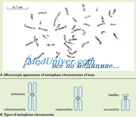 хромосомы при наследственных заболеваниях
