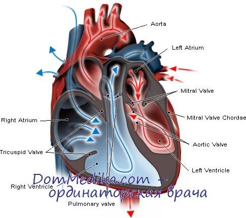 Сочетанные и комбинированные пороки сердца. Причины, диагностика
