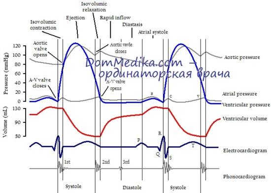 изучения сердечного цикла.