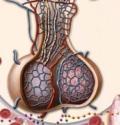 заболевания гипофиза и гипоталамуса
