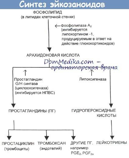 Синтез эйкозаиноидов