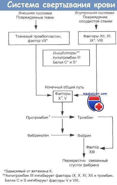 Система свертывания крови и витамин К