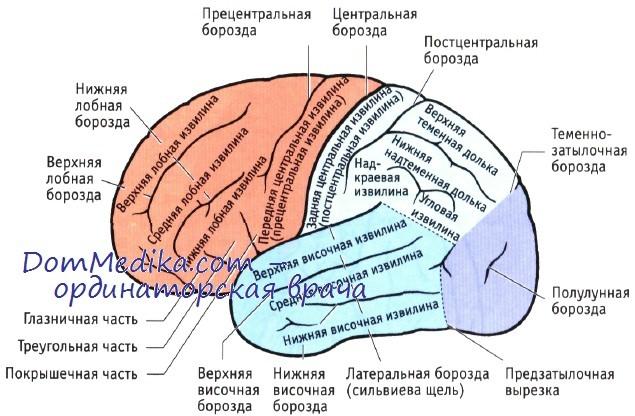 http://dommedika.com/nevrologia/Pic/golovnoi_mozg.jpg