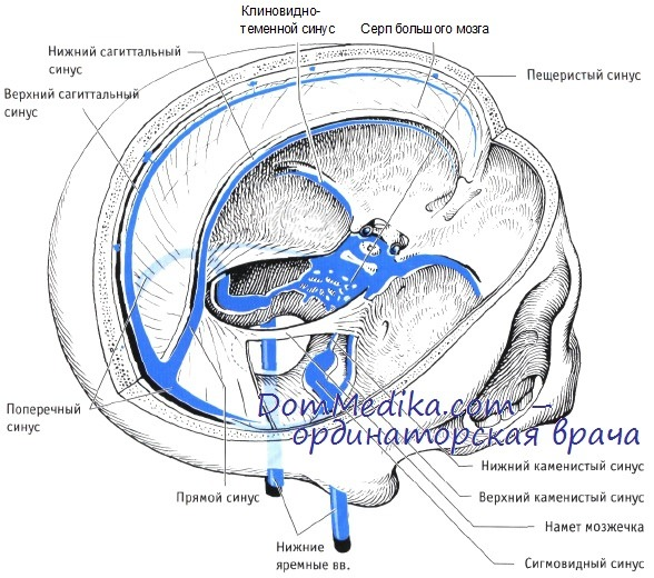 Brain venous sinus anatomy