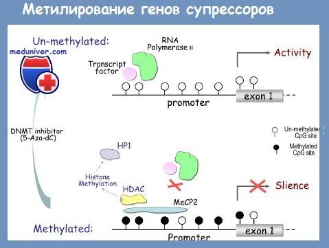 Метилирование генов супрессоров