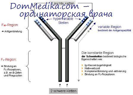 стимуляция иммунитета