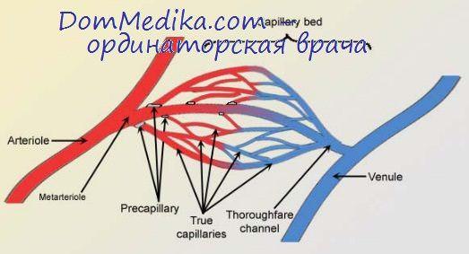 артериальная и венозная гиперемия
