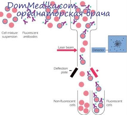 Активная и пассивная гемагглютинация.  Реакция связывания комплемента.