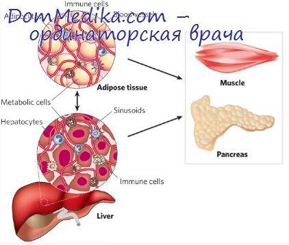 какие симптомы наличии паразитов в организме