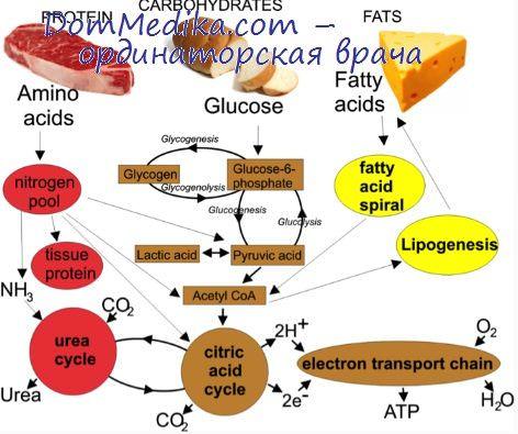 увеличение содержания холестерина в крови называется