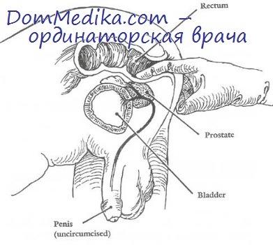 laskat-muzhu-prostatu